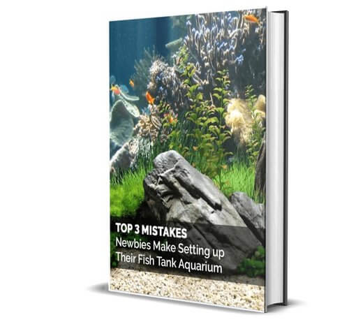 Top 3 Mistakes Report E-book