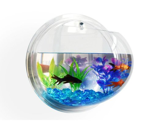 Acrylic versus glass aquariums learn more about these for Acrylic vs glass fish tank