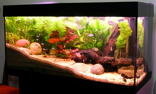 Clean-tropical-aquarium