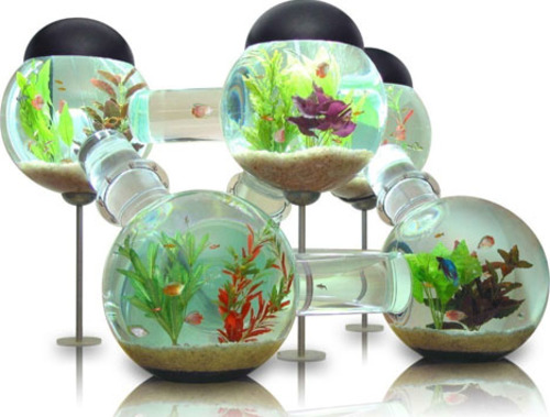 CoolFishTanks