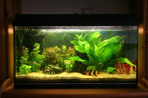 Fish tank set up for beginners for Acrylic vs glass fish tank