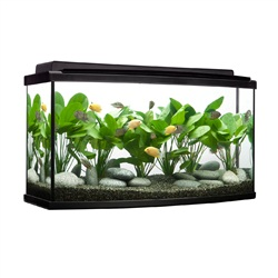 Fluval 45 Gallon Bowfront Aquarium Kit