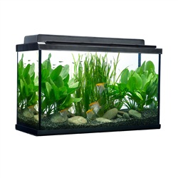 Fluval 29 Gallon Fish Tank Kit