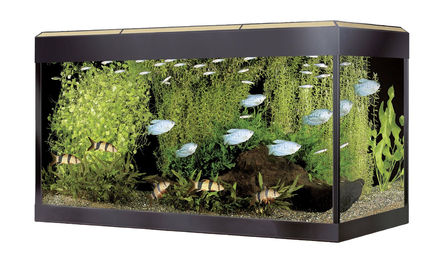 Fluval roma aquarium for Fluval fish tank