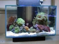 Best Beginner Aquariums
