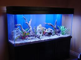 Which Fish Tank Tropical Fish And Marine Fish Aquariums