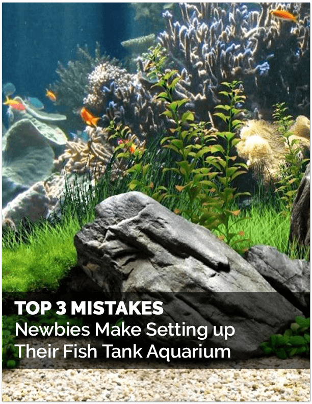 Top 3 Mistakes Setting Up Aquarium