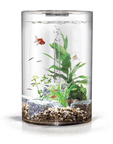 Cylindrical fish aquariums for sale for Small fish tanks for sale