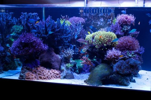 A Typical Large Saltwater Tank