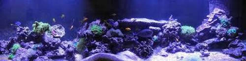 Marine aquarium lighting
