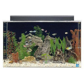 Seaclear Acyrlic 29 Gallon Aquarium