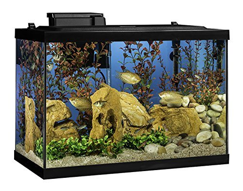 tetra 20-gallon fish tank kit