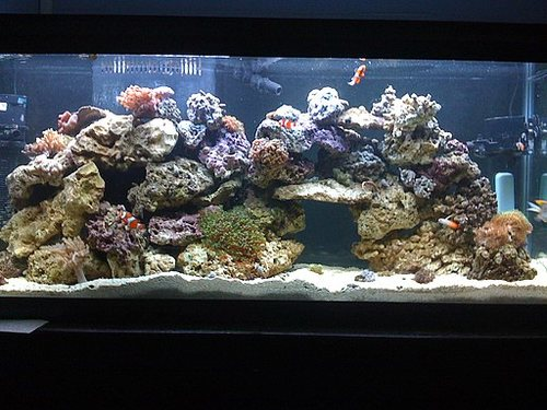 55 Gallon Reef Tank