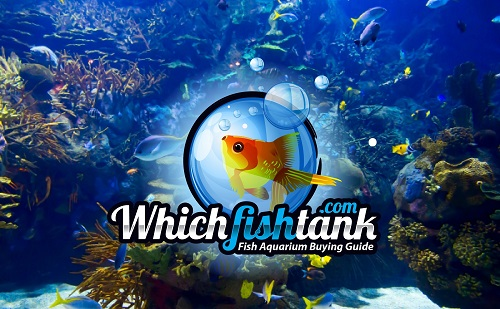Which Fish Tank Logo