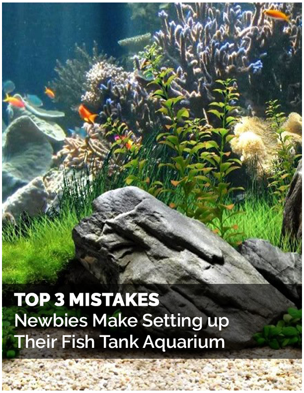 Top 3 Mistakes Newbies Make - Free Report